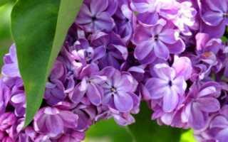 Гадание на цветках: разновидности и правила ворожбы