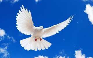 Гадание Почтовая голубка: особенности и инструкция для ворожбы