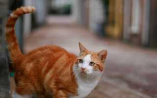 Сбежал кот: где искать пропавшего питомца